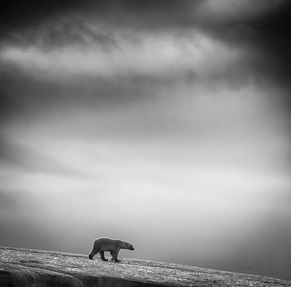 Svalbard, Norveç
