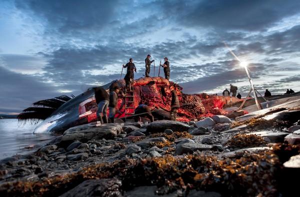 Inuit kabilesi ve balina