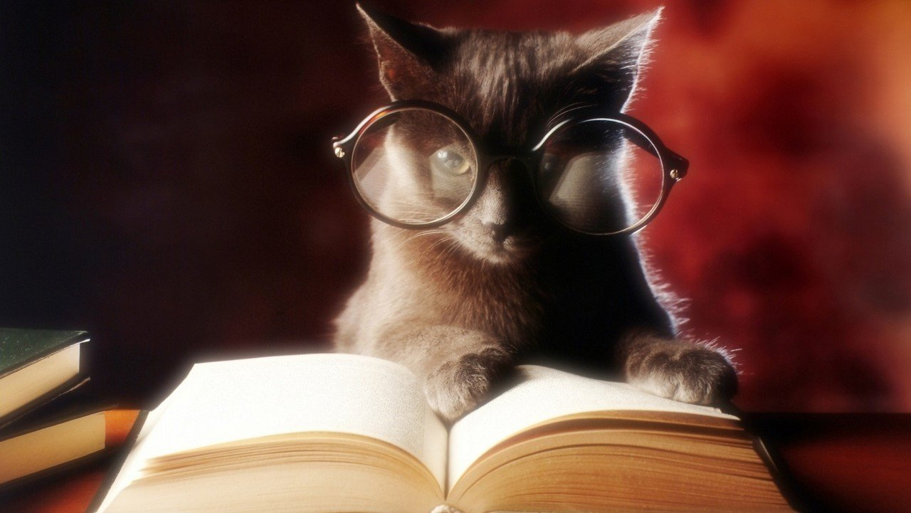 kitap okuyan kedi resmi