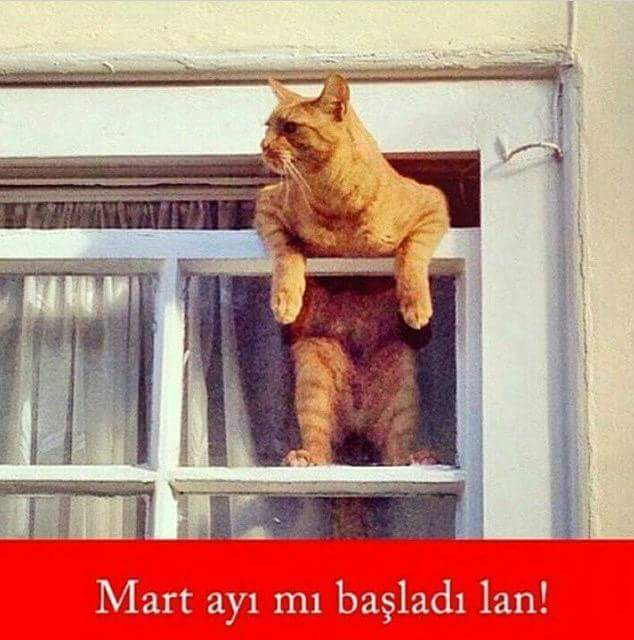 mart kedisi