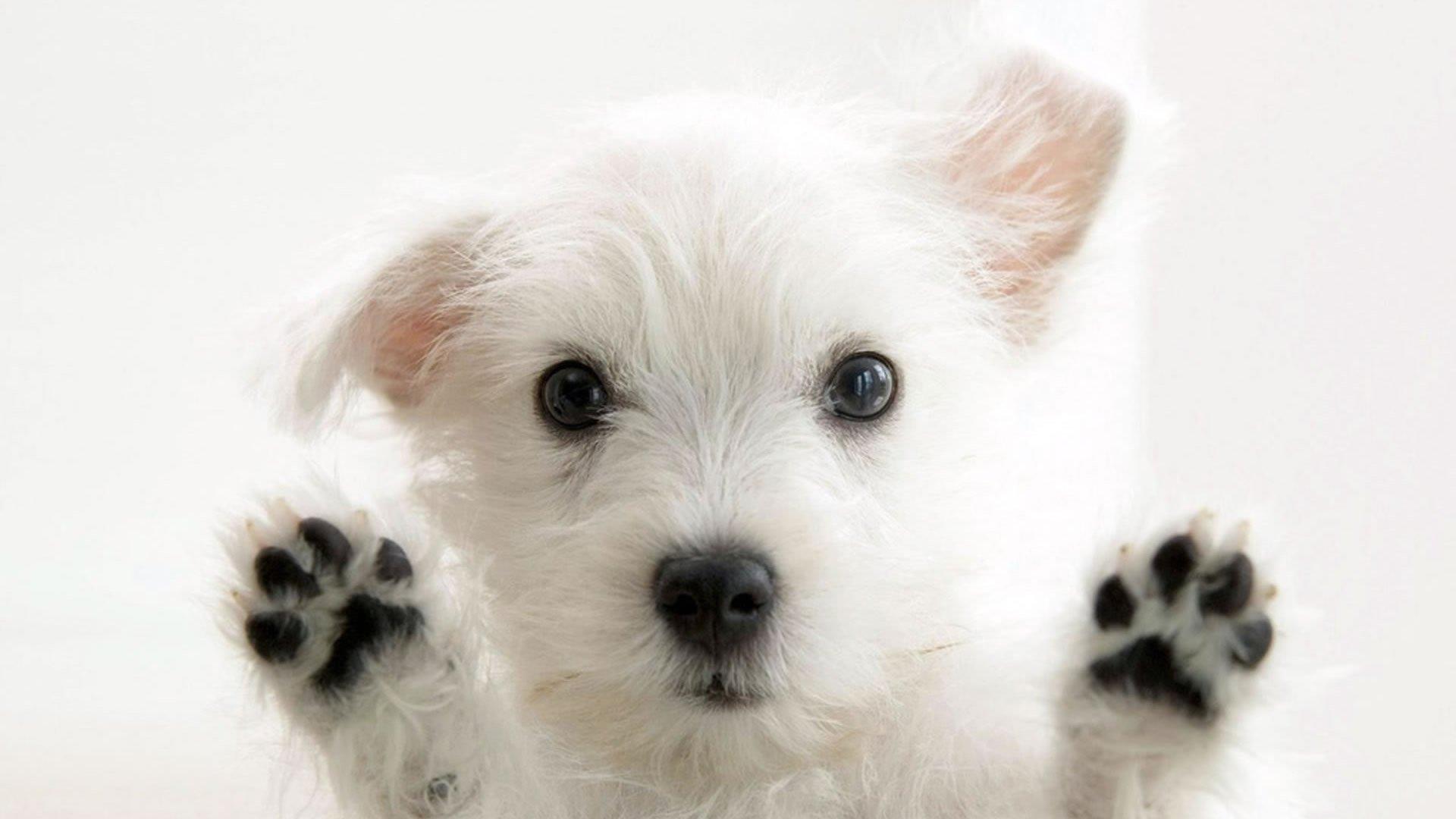 sevimli köpek resmi
