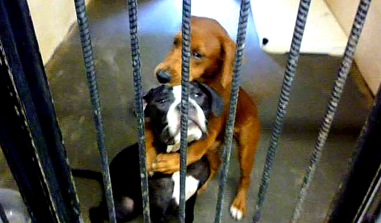 birbirine sarılan köpek resmi
