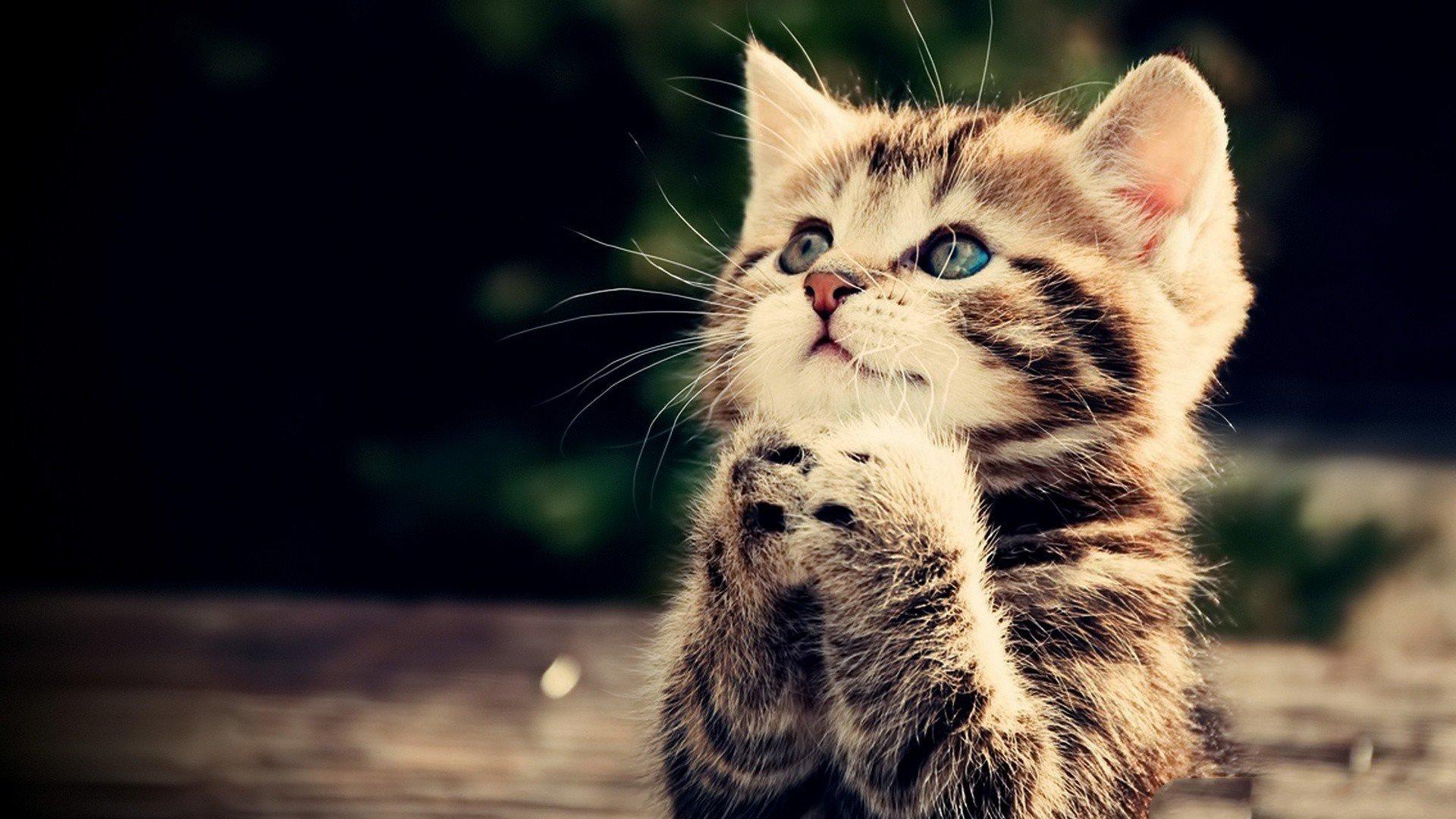 dua eden kedi resmi